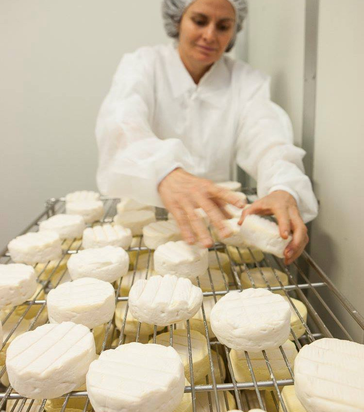 Tilba Real Dairy's cheese - in production at ABC Cheese Factory
