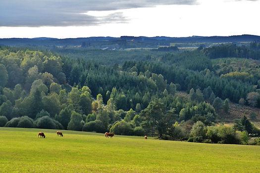 Plateau_de_Millevaches,_près_de_Saint-S