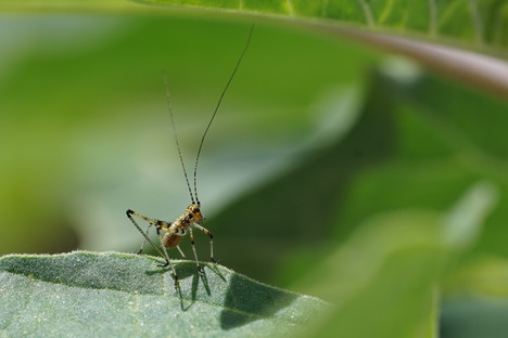 Young katydid ready to face life