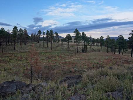 Arizona Trail 2021