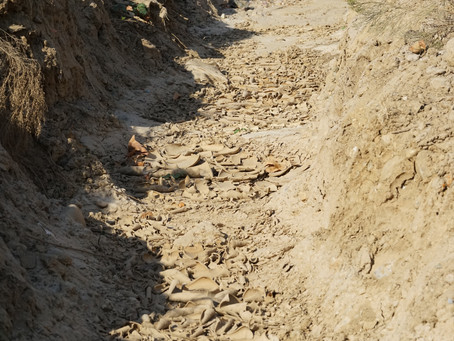 Bobcat 'tracks to go' & bonus battle.