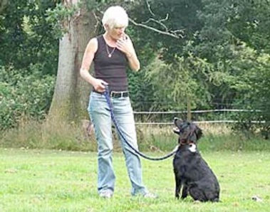 privatedogtraining_005.jpg