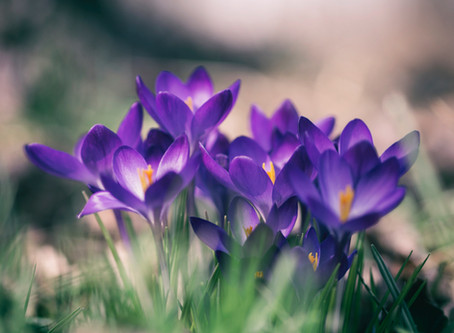 Und plötzlich ist es Frühling
