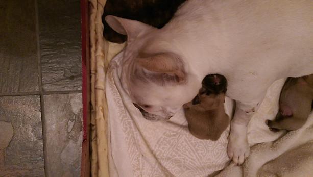 LuLu LOVE HER BABIES!