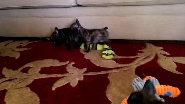 ROMPING HAPPY PUPPIES!