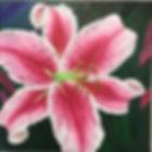 Stargazer Lily.jpg