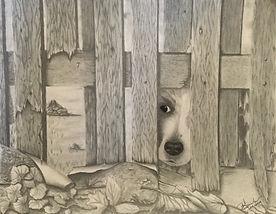 Peeking Puppy.jpg