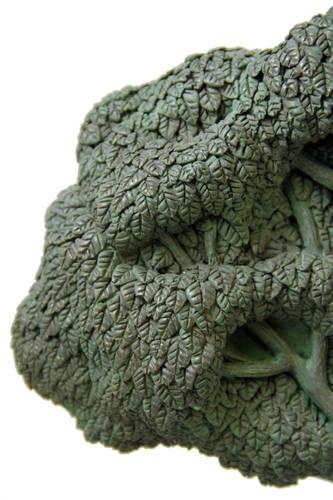 Rooted Together - Timeless Ketubah Design