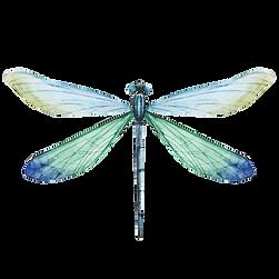 Libellule bleu
