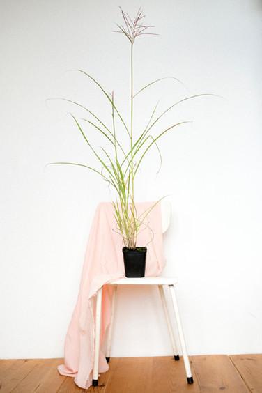 Kore biologische tuinplanten