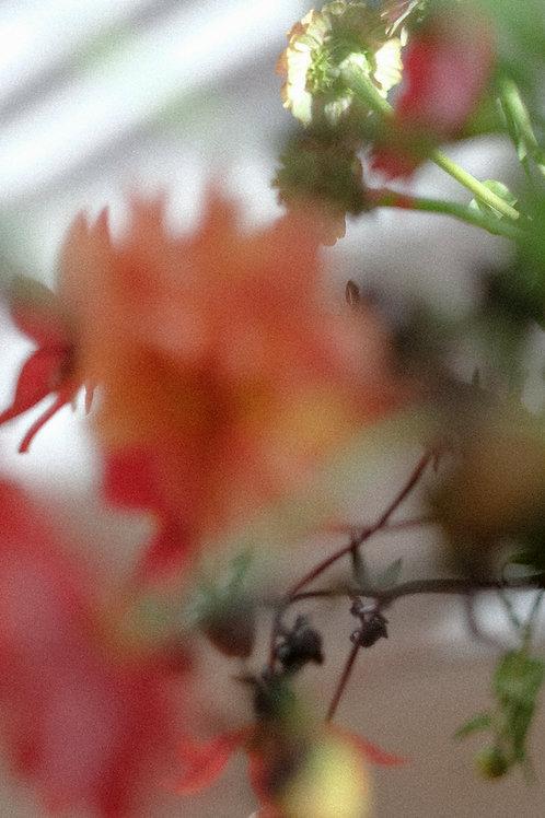 maandelijks verse       bloemen