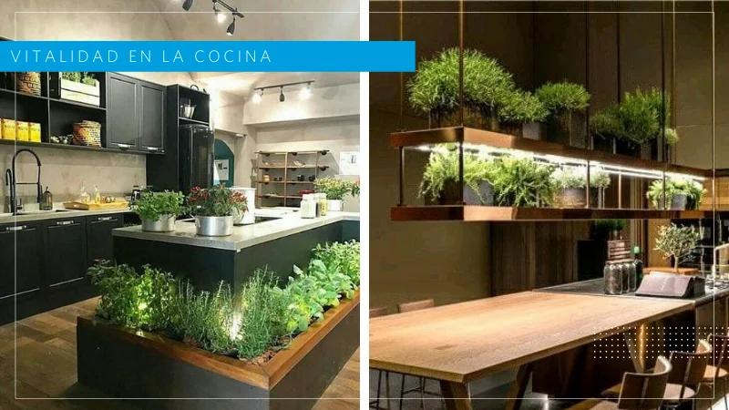 plantas cocina Feng Shui