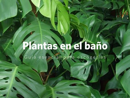 La guía esencial para elegir plantas para el baño