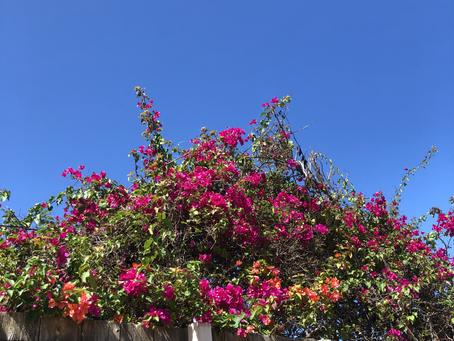 ハワイのピジン英語:日本語から来た言葉達