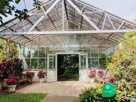 ハワイでおすすめの場所:フォスター植物園