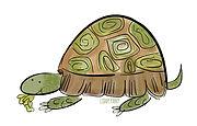 Tortoise.jpg