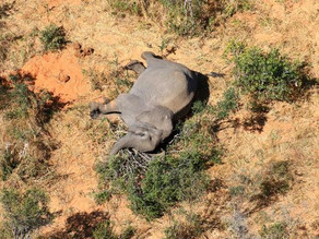 Botswana Is Investigating the Deaths of Hundreds of Elephants Since May