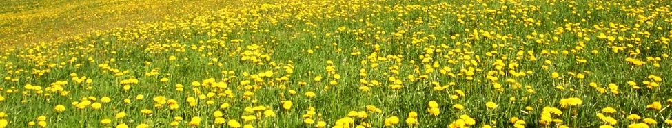 primavera_footer.jpg