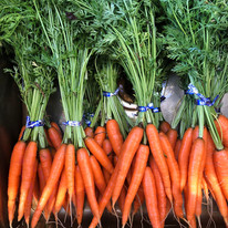 Delicious, fresh carrots