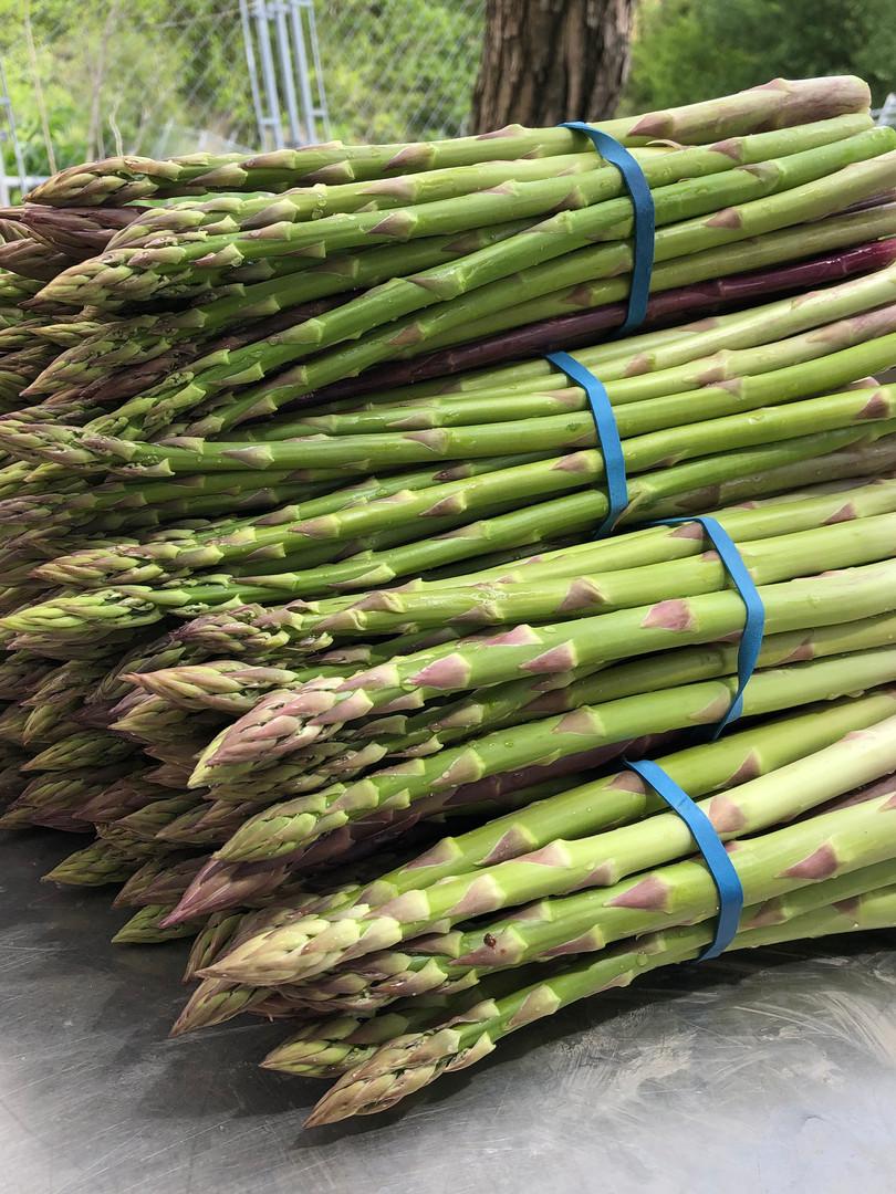 Fresh-cut asparagus from our farm