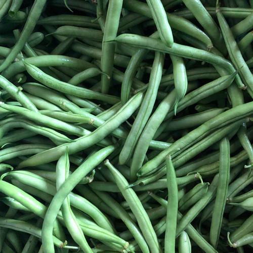 Green beans, a CSA favorite!