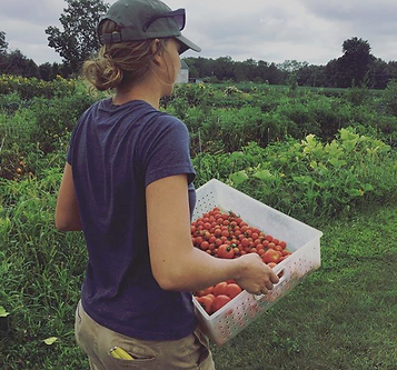 Bethany Picking Tomatoes