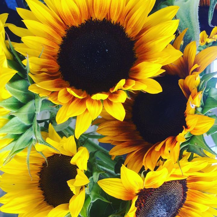 Sunflowers are sometimes available for purchase