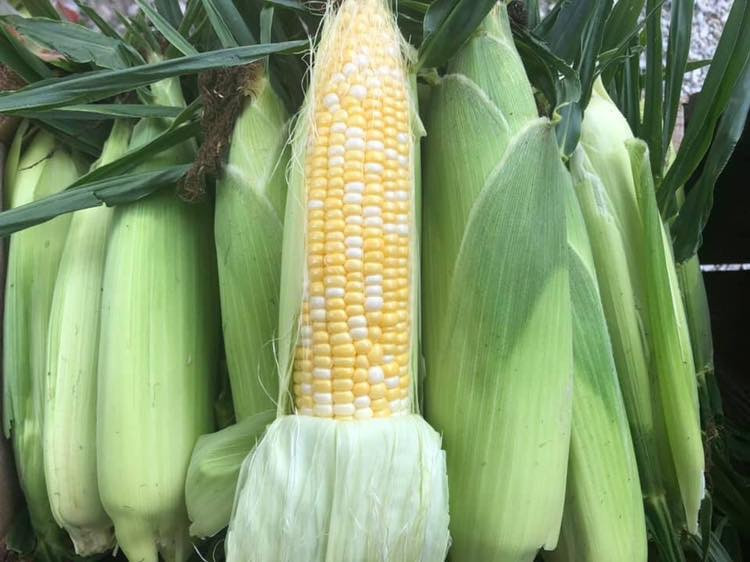 What can we say? Our sweet corn is the best!
