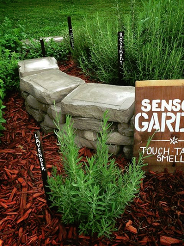 Fresh herbs are available to touch, taste and smell in our sensory herb garden