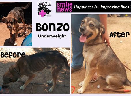 Smile News: Bonzo