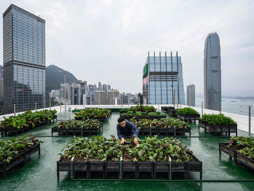 Urban Farming: Feeding our Future