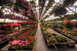 Beautiful greenhouses with hanging baskets