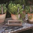 Herbs Photo.jpg