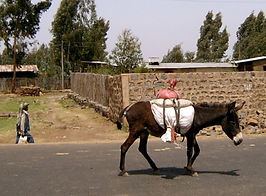 donkey walking down the road