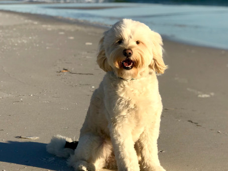 Top 10 Bay Area Dog-Friendly Beaches