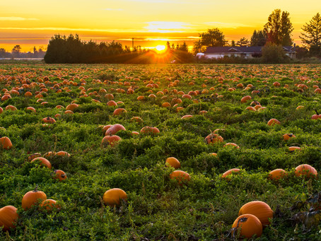 Top 5 Best Bay Area Covid-Friendly Pumpkin Patches in 2020