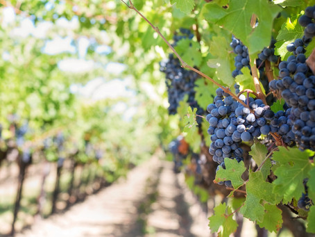 Top 5 COVID-Friendly Outdoor Wineries in the Bay Area