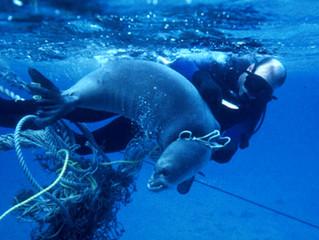 Let us keep the Sea Clean!