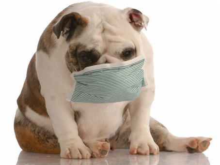 Canine Influenza FAQs for Pet Owners and Veterinarians