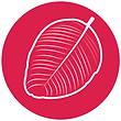 leaf2-icon.png