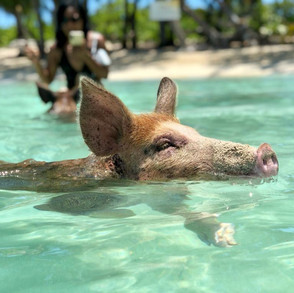 Eleuthera Adventure with Swimming Pigs and Turtles Tour