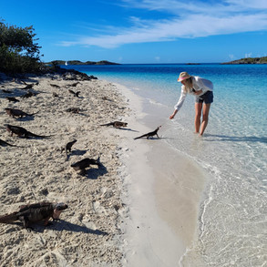 Exuma Island Hopping and Swimming Pigs Tour