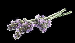 lavender-flower1-ingredient-photo.png