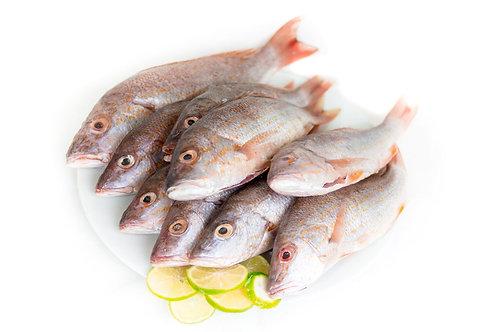 Dish Fish