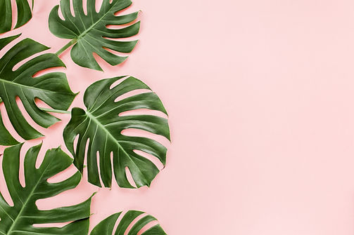 Tropical leaves Monstera on pink background. Flat lay, top view.jpg