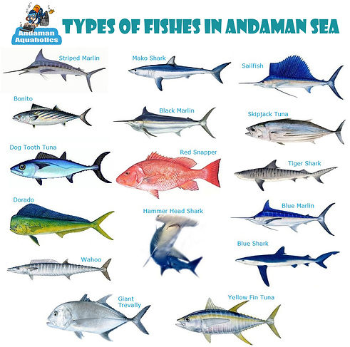 Fishes found in Andaman.jpg