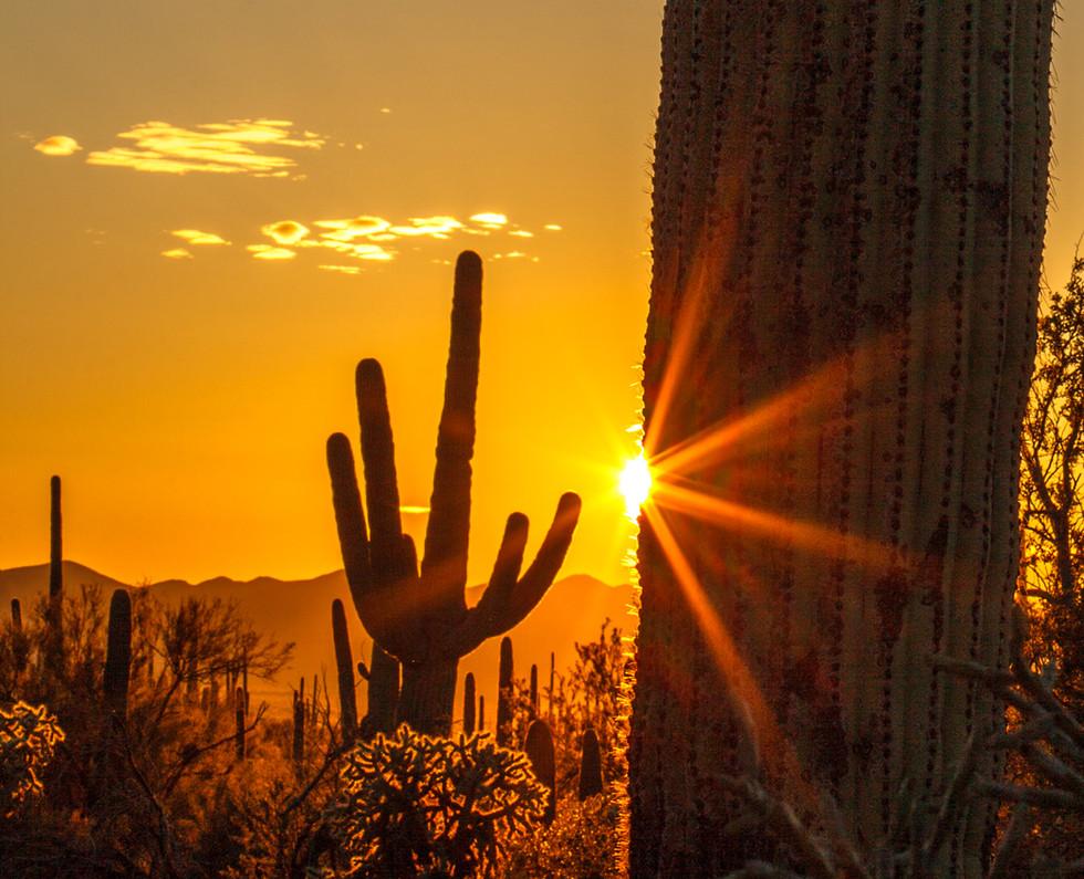 Saguaro Star