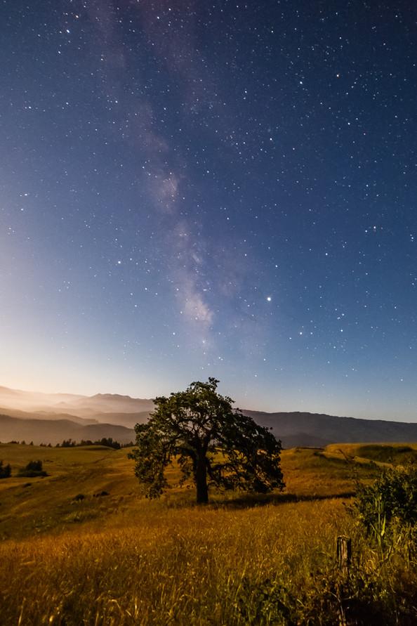 Milky Way and Oak Tree