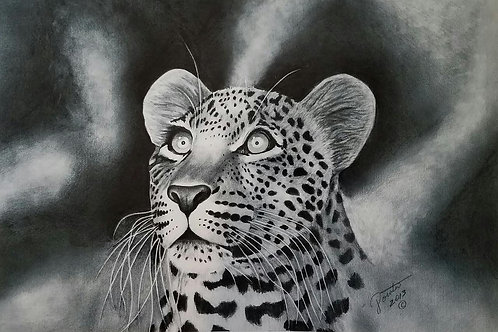 Leopard 20x30 limited edition print