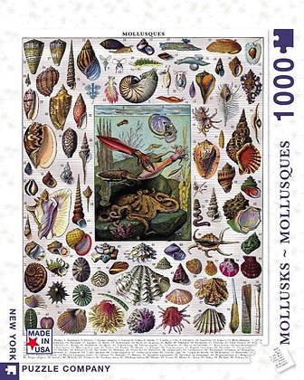 Mollusks 1000pc Jigsaw Puzzle